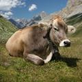 Что мешает молочному животноводству вКазахстане?