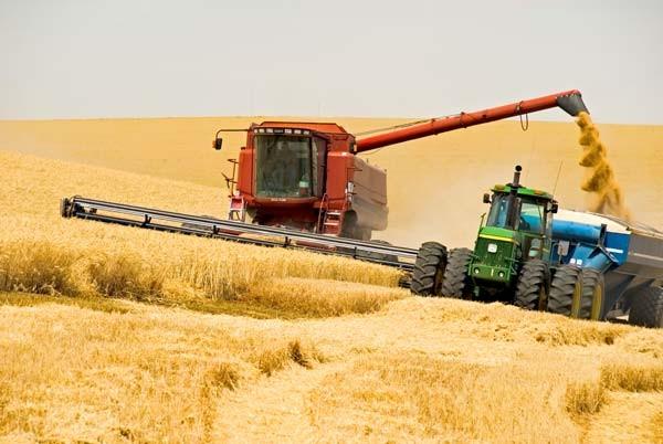 Урожайность зерновых падает