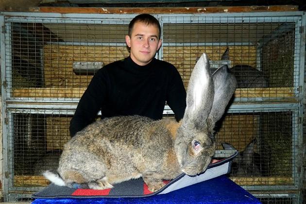 Тонкости бизнеса наразведении кроликов
