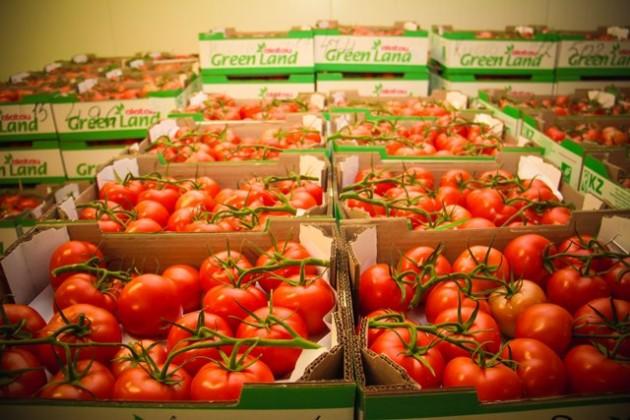Сделано вКазахстане: лучшие сорта томатов иогурцов без ГМО круглогодично