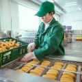 МСБ в обрабатывающем секторе уже получил 36,8 млрд тенге