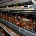 Фонд прямых инвестиций вложится в птицефабрику