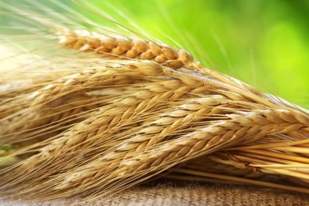Повышен мировой прогноз сбора зерна