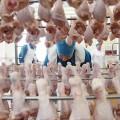 Минсельхоз ввел запрет на ввоз мяса птицы из России и Беларуси