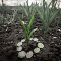 Банки стали активнее кредитовать агробизнес