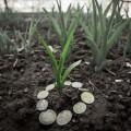 Сельхозземли варенду будут предоставлять казахстанцам наконкурсной основе