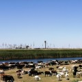 Сколько микрокредитов выдано в Западно-Казахстанской области