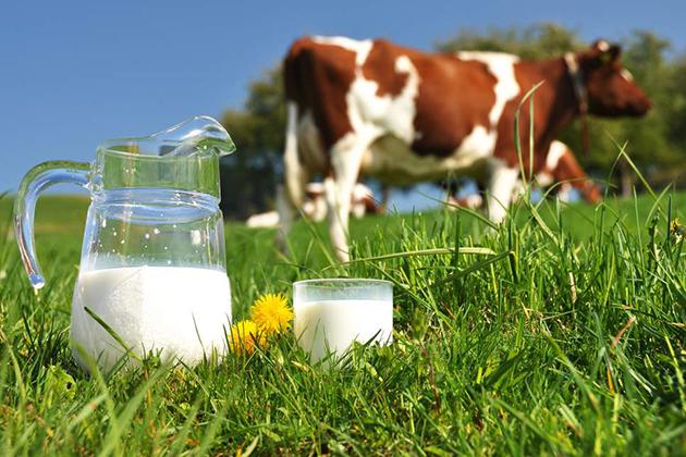 Что поможет молочной отрасли Казахстана