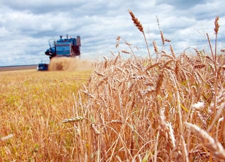 Экспорт пшеницы в СНГ составил свыше  2 млн. тонн