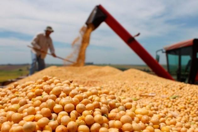 Казахстан ежегодно наращивает площади посевов сои