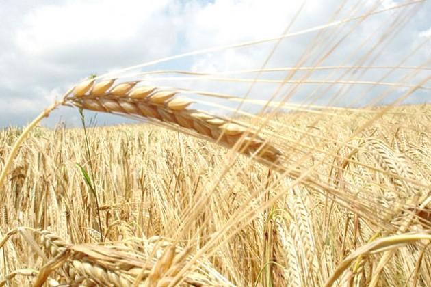 Кризис на Украине ведет к росту цен на зерно
