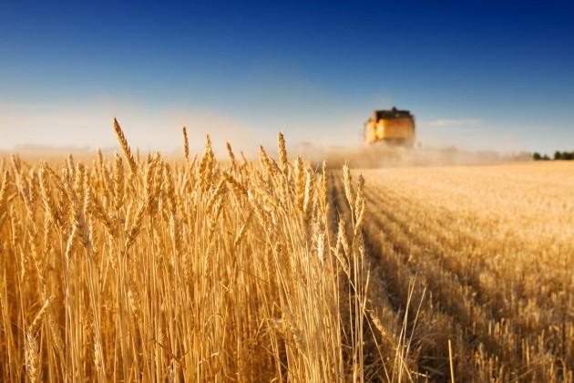60% урожая зерновых убрано в Казахстане