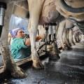 Импорт молочных товаров вКазахстан сократился