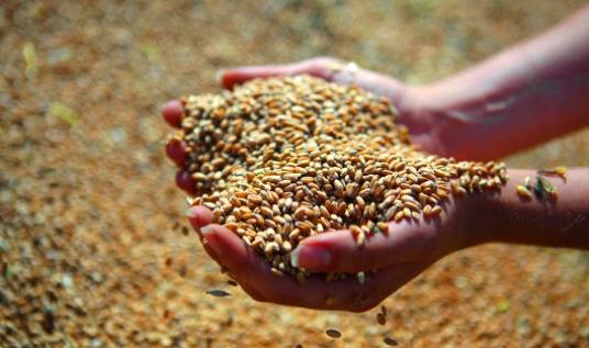 Экспорт зерна в Китай будет увеличиваться