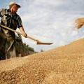 Китай закупит у РК 100 тыс тонн пшеницы