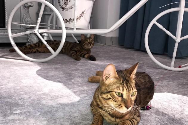 Как построить бизнес на любви к кошкам