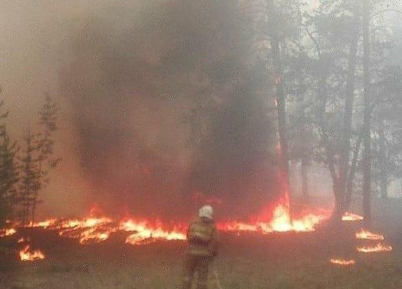 ВВосточном Казахстане тушат лесной пожар
