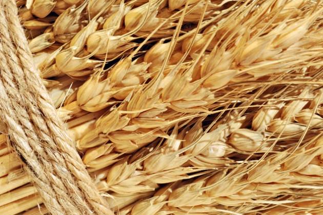 40% выручки от экспорта зерна на Ближний Восток уходит на логистику