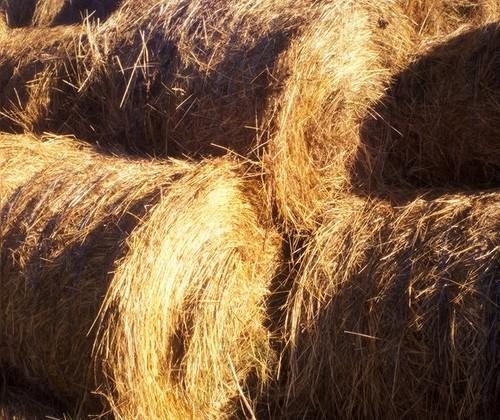 Засуха в США подняла до рекорда цены на сено