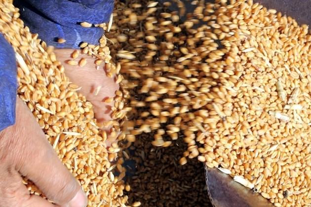 Продкорпорация экспортировала 430 тысяч тонн зерна