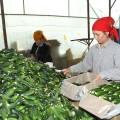Туркестанская область активно развивает сферу сельского хозяйства