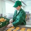 Производителям возместили 120 млн тенге за продвижение местных товаров