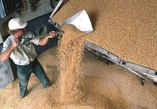 2,4 млрд. тенге направят на хранение зерна