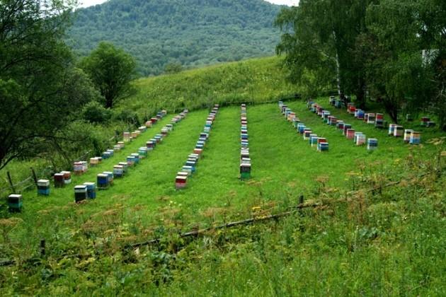Пчеловоды хотят создать реестр пасек РК и России