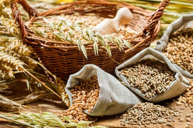 Биржи торговля зерном скрипты для торговле на форекс