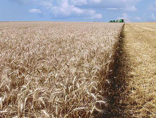 Урожай зерна в Казахстане не дотянет до 11 млн. тонн