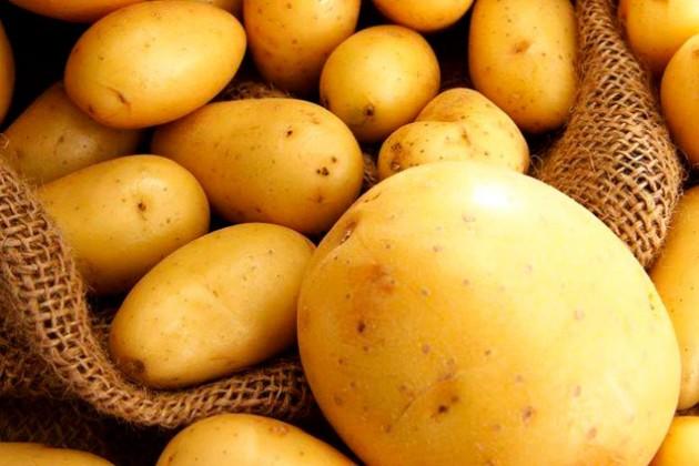 Картофель из Павлодара поедет в Россию