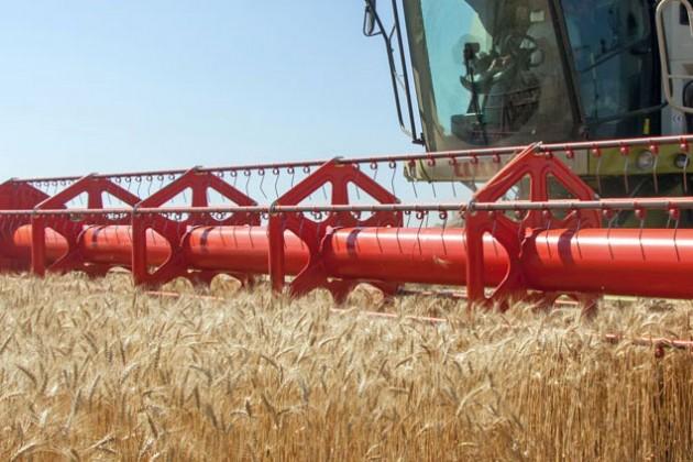 Костанайская область вдвое сократила экспорт зерна