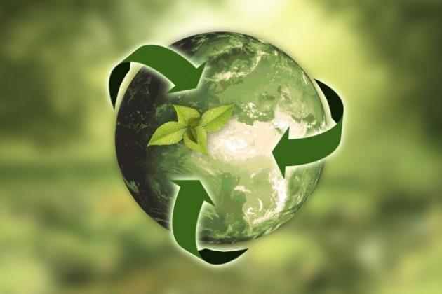 Как «Зеленый мост» помогает решить экологические проблемы