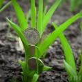 Кредитная поддержка сельского хозяйства снизилась