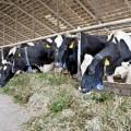 Фермерам выдали кредитов на 28 млрд. тенге
