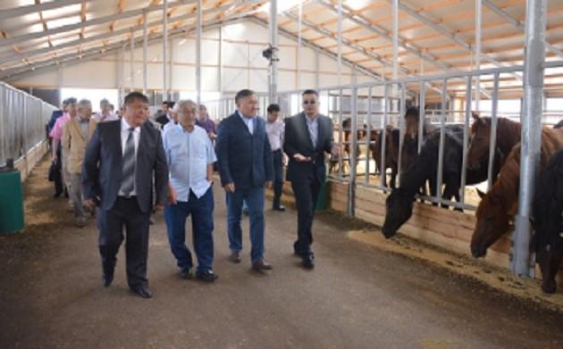 В РК запустили производство сухого порошка из кобыльего молока