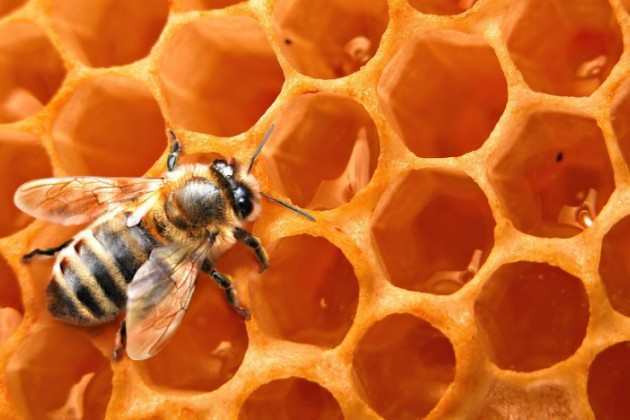 Вчем проблема медового бизнеса вКазахстане?