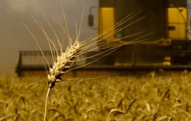 В2018году производство зерна будет самым низким за3года
