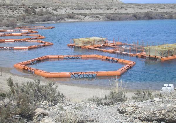 Аквакультуре в Казахстане быть или о рыбных ресурсах замолвили слово…