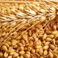 Казахстан намерен экспортировать продукты в Израиль и Японию