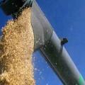 Аграрии могут получить товарные кредиты зерна