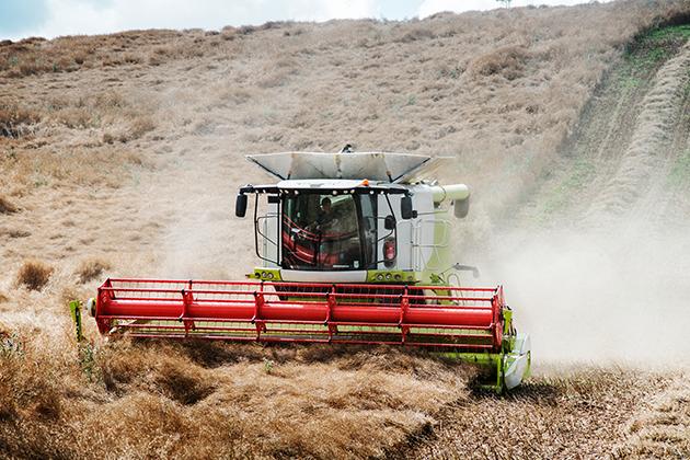 Сельское хозяйство – основа сильной экономики