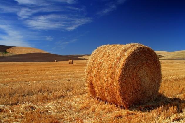 Господдержка стимулирует сельское хозяйство кросту