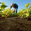 Услуги портала eGov всфере земледелия