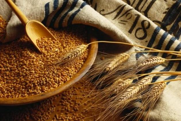 Экспорт пшеницы в страны ТС увеличился в 7 раз