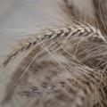 Казахстан собрал 20 млн тонн зерновых в бункерном весе