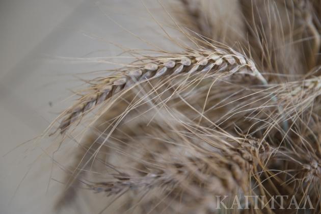 Мировой сбор зерна снизится на 4 миллиона тонн