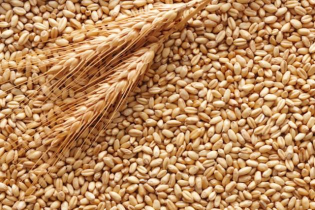 Казахстан возобновляет экспорт пшеницы в Иран