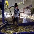 Сбор и утилизацию опасных отходов возьмут под контроль