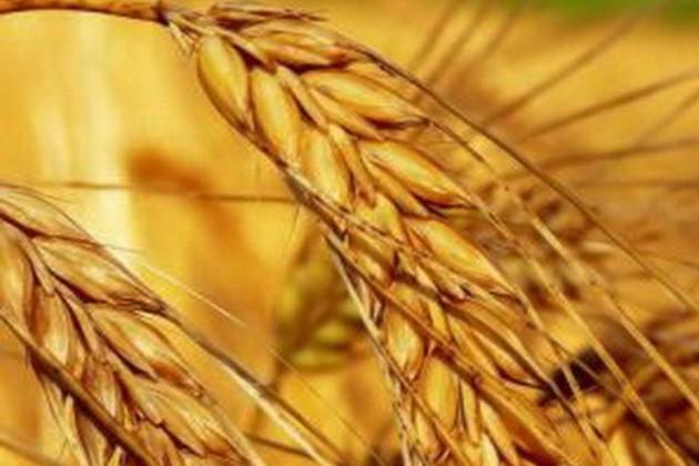 Статагентство: Показатели по урожаю завышены